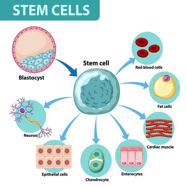 Information poster on human cells illustration